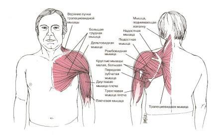 Болит левая часть плеча