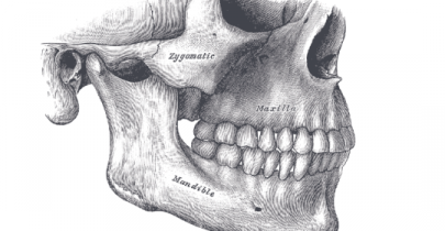Anatomy of jaw